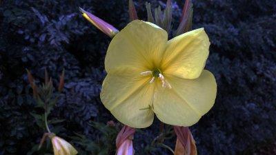 blomma-gul.jpg