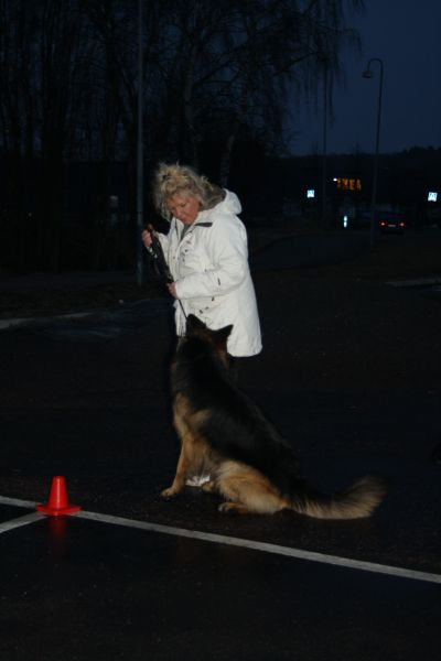 torrekulla-hund-073.jpg