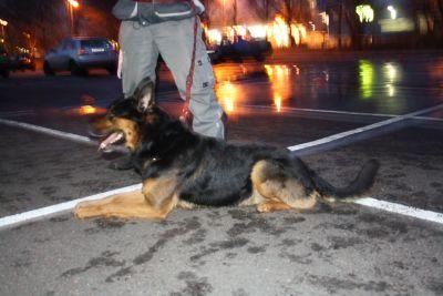 torrekulla-hund-131.jpg