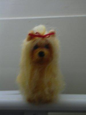yorkshire-terrier3.jpg