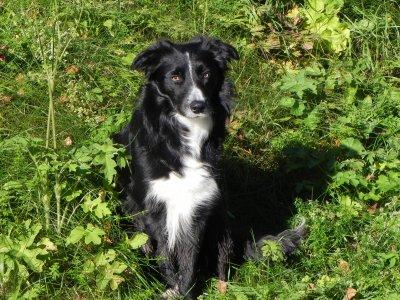 noss-godkandvallhund-011.jpg