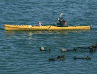 Kajaktur på vattnet