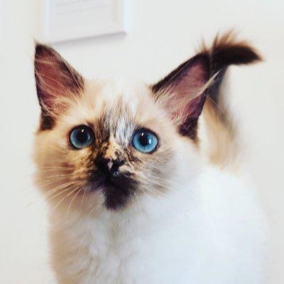 kladdiga ögon kattunge