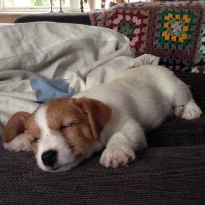 /billy-sover.jpg