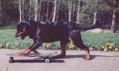 jack-skateboard.jpg