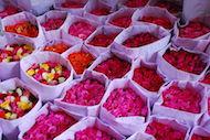 Les belles fleurs de Pak Khlong Talat