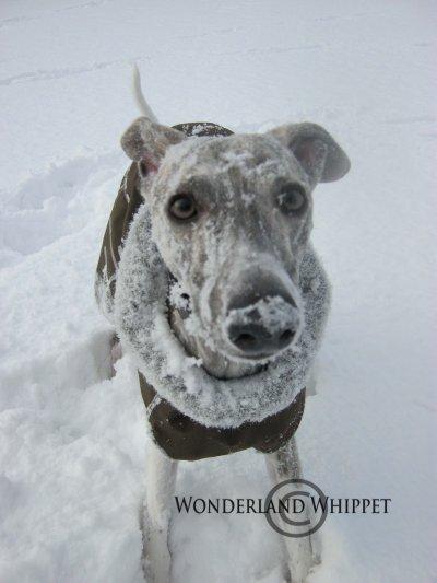 Winter Wilmer