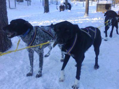 hund2-039.jpg