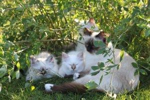 /steffie-njuter-i-grongraset-med-3-av-kattungarna.jpg