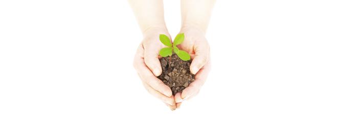 Bild på två händer som håller i jord med en liten planta