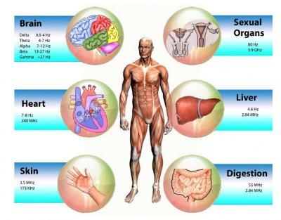 Pro Leben Information   Für ein stabiles Immunsystem