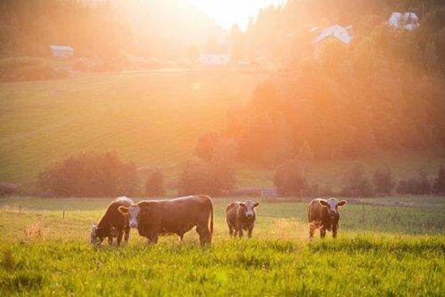 svensk landsbygd