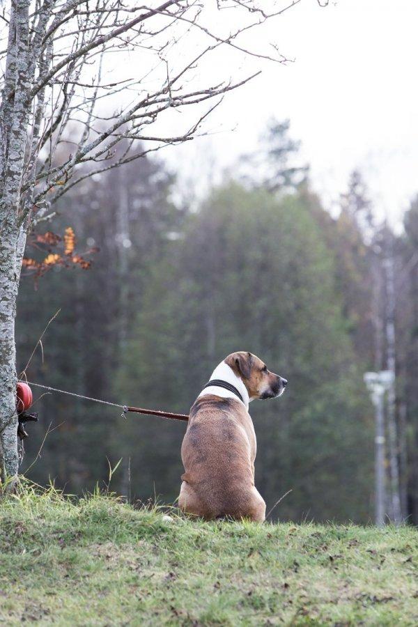 /hund.jpg