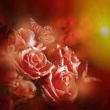 /aprikosa-rosor.jpg