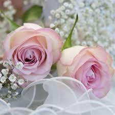/rosa-vita-rosor.jpg