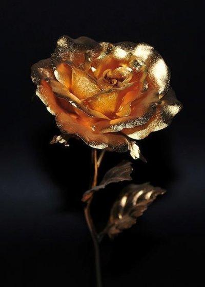 /black-roses-golden-rose-by-dragan-kudjerski-1.jpg