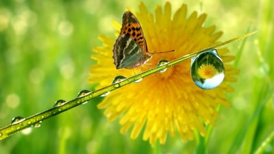 green-nature-drop-macro-sunflowers-butterfly-wings-butterflies-1920x1080-1112jp.jpg