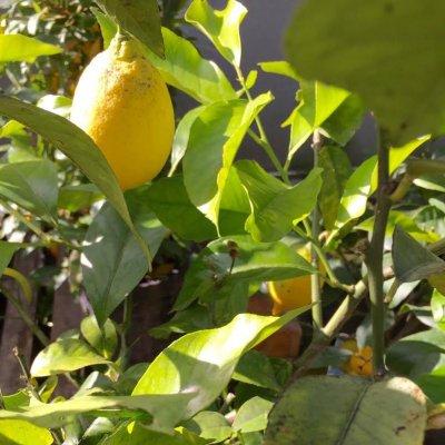 /citrus3.jpg