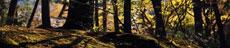 forestfloor-thumbnail.jpg