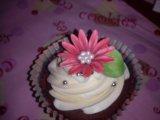 brown and white chocolate cupcake