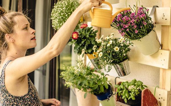 kvinna vattnar växter på balkongen