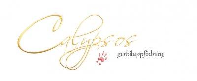 calypsos-gold-pink.jpg