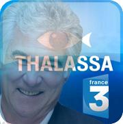 casting thalassa