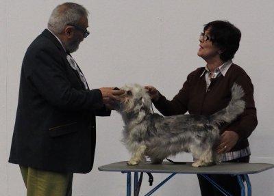 /amigo-my-dog-17.jpg