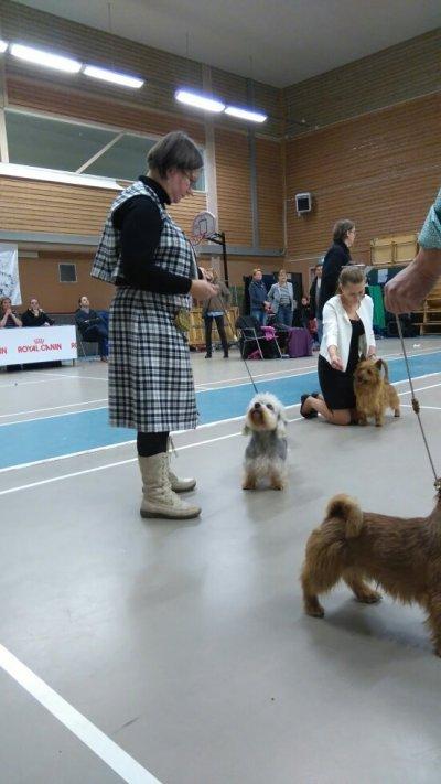/wella-i-finalen-basta-unghund.jpg