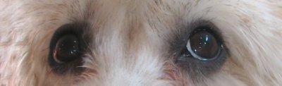 /eyes-m-wall.jpg