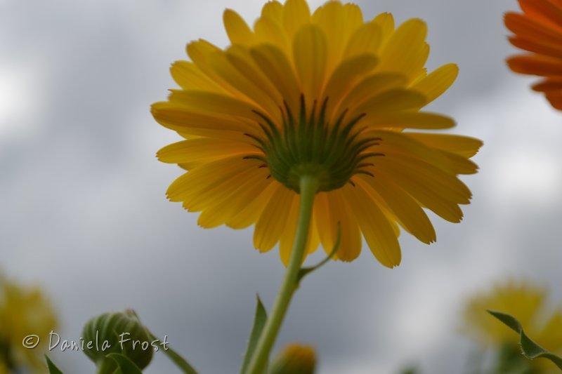 blommor-243.jpg