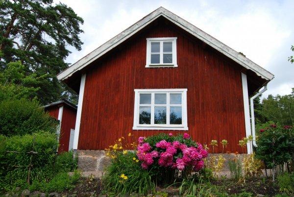rött hus med pioner