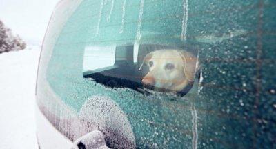 /hund-i-kall-bil.jpg