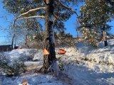 Utöver att dränera i Stockholm, kan vi även hjälpa dig med trädfällning.