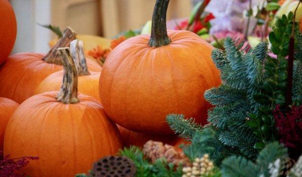 Jag älskar hösten och en av mina favorithögtider 758bfb8000fff