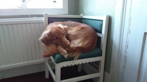 Tillräckligt stor stol