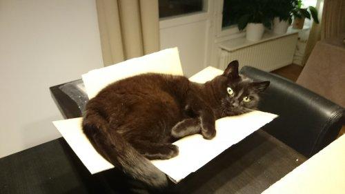 Katten Skorpan