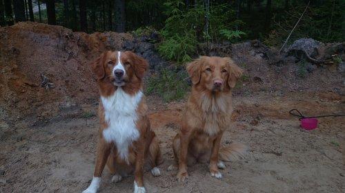 Lova och Flora