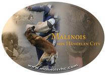 Malinois VHC