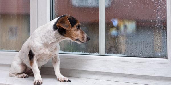 fönsterbänk i sten med hund