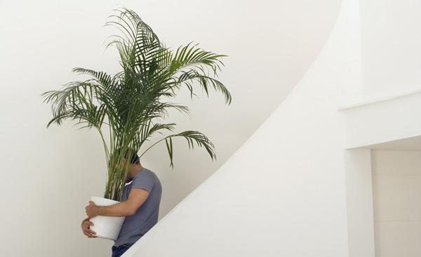 flytta krukväxter