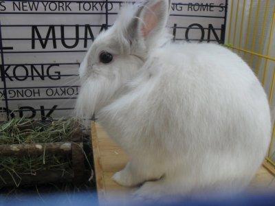 kaninerna-och-marsvinen-029.jpg