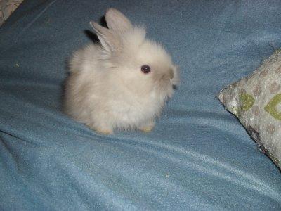 kaninerna-och-marsvinen-194.jpg