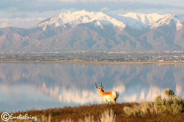 emelieering-antelopeisland.jpg
