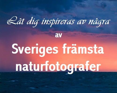 Klicka på mig för att se Sveriges främsta naturfotografer bilder