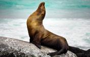 Galapagos – dagsturer ingår!
