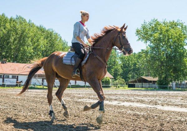 rida på hästen