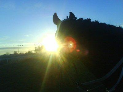 king-minos-i-solnedgangen.jpg