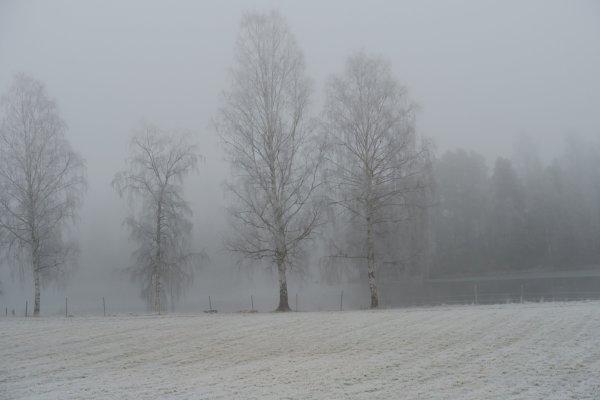 /vinterbild-pa-angen.jpg