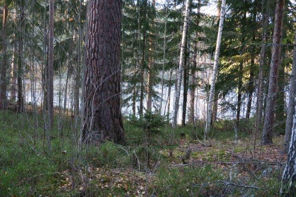 /naturstigen-uvberget-38b.jpg